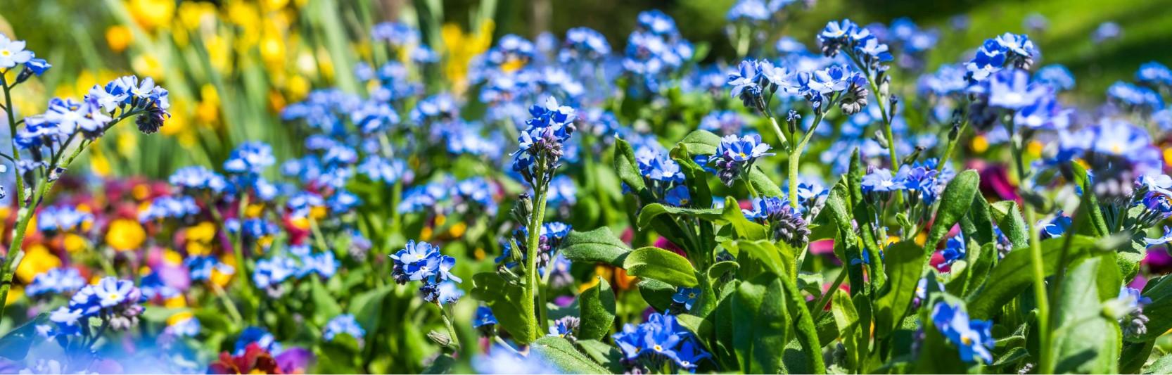 Newsartikel:Mein schöner Garten